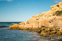 Coastline near Shag Point village with NZ fur seal and seaguls, Coastal Otago, East Coast, New Zealand