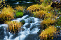 Bunch grasses in fall color along the   Wild and Scenic Clakamas River, Oregon
