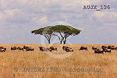 Dr. Xiong, ANIMALS, wildlife, photos, AUJX136,#a#