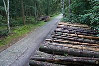 GERMANY, lower saxonia, Forest, fir timber harvest / DEUTSCHLAND, Niedersachsen, Fichtenwald, Holzernte nach Borkenkäferbefall und Sturmschäden, Holzpolter