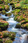 Mossy green stream with small waterfalls and colorful fall leaves.