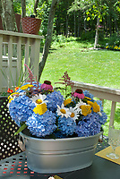 Hydrangea, daisy Leucanthemum, Achillea yarrow, Echinacea purple coneflower, Astilbe, cut flowers in galvanized container