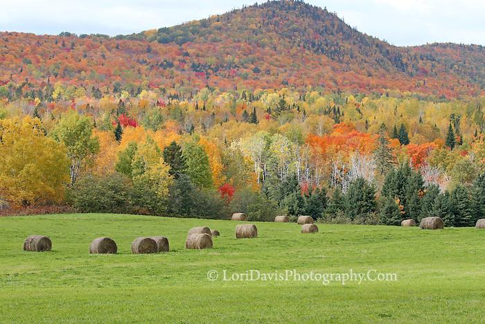 Autumn Rolls of Hay -far  #L60