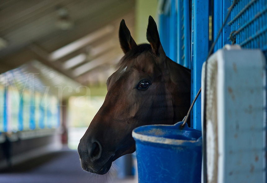 Race horse in stable.