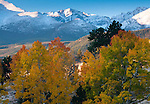 fall color, aspen, October morning, Rocky Mountain National Park, Colorado