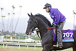 Dance with Fate, trained by Peter Eurton, trains for the Breeders' Cup Juvenile at Santa Anita Park in Arcadia, California on October 28, 2013.