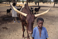 Near Akadaney, Niger - Fulani Boy with Cow.