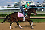 LOUISVILLE, KY - APRIL 25: Carina Mia (Malibu Moon x Miss Simpatia, by Southern Halo) gallops on the track at Churchill Downs while training for the Kentucky Oaks. Owner Three Chimneys Farm LLC, trainer William I. Mott. (Photo by Mary M. Meek/Eclipse Sportswire/Getty Images)