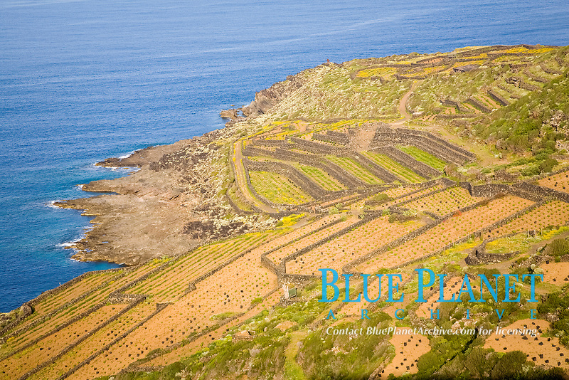 wineyard near Cala Levante, eastern side of Pantelleria Island, Italy, Mediterranean Sea