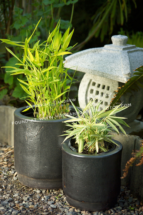 Two small container bamboos side-by-side in this display in an Asian-themed garden scene: Viridi-Striatus bamboo (Pleioblastus viridi-striatus) on the left and Dwarf Whitestrip bamboo (Pleioblastus furtunei) on the right.  Viridi-striatus is a sun/shade species showing more of its chartreuse brightness the more sun it gets, but can get leggy as it approaches max. height of roughly 5 feet.  Meanwhile, Dwarf whitestripe is  a roughly 2-4 foot grower with striking variegated leaves that look great in containers and as undergrowth.