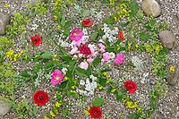 Blumen-Mandala, Blumenmandala, Mandala aus Blumen, Blüten, Blütenblättern, Blüten von Rose, Klatschmohn, Frauenmantel, Gilbweiderich und anderen mehr, Gartenbank