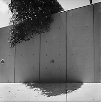 """Bougainvillaea<br /> From """"The other wind"""" series. Miami, Florida, 2010"""
