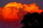 Clouds and Heron