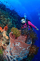 Female scuba diver observing the colorful crinoids adorning a barrel sponge along the edge of a coral reef off Papua New Guinea.