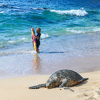A Hawaiian green sea turtle and child holding a boogie board at Ho'okipa Beach, Maui.