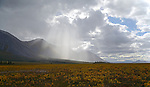 A rainstorm moves up the Sheenjek River valley, on the south flank of Alaska's Brooks Range, in the Arctic National Wildlife Refuge in late August.