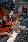 Puget Sound, marine research, Washington State, Nancy Elder, USGS, Measuring Pacific Herring, National Marine Fisheries Service, NMFS, marine, research scientists trawl net to monitor diseases of fish in Puget Sound, Skagit Bay, aboard the research vessel Harold W. Streeter