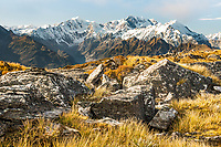 Alpine rocks and tussock country and Southern Alps with highest peaks Aoraki Mount Cook, Mount Tasman and La Perouse, Westland Tai Poutini National Park, UNESCO World Heritage Area, West Coast, New Zealand, NZ