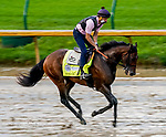September 2, 2020: Storm the Court exercises as horses prepare for the 2020 Kentucky Derby and Kentucky Oaks at Churchill Downs in Louisville, Kentucky. The race is being run without fans due to the coronavirus pandemic that has gripped the world and nation for much of the year. Scott Serio/Eclipse Sportswire/CSM