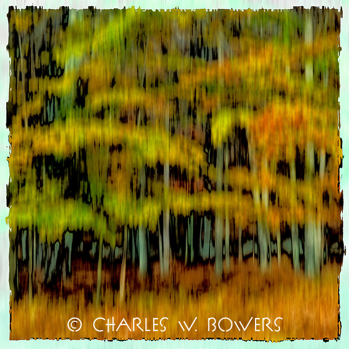 Fall foliage in West Virginia woods turn the forest into a blaze of vibrant oranges, yellows and reds. The trees seem to shimmer and radiate the excitement of the forest preparing for the coming winter.<br /> <br /> - Limited Edition of 50 Prints