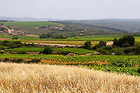 Domaine Peyre Rose, St Pargoire. Gres de Montpellier. Languedoc. France. Europe. Vineyard.