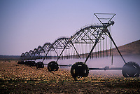 Sprinkler irrigation of field, Lordsburg, New Mexico