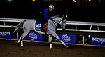 DEL MAR, CA - NOVEMBER 01: World Approval, owned by Live Oak Plantation and trained by Mark E. Casse, exercises in preparation for Breeders' Cup Mile at Del Mar Thoroughbred Club on November 1, 2017 in Del Mar, California. (Photo by Scott Serio/Eclipse Sportswire/Breeders Cup)