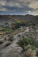 Palm Oasis in Anza Borrego Desert.