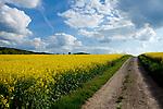 Europa, DEU, Deutschland, Hessen, Vogelsbergkreis, Schwalmtal, Agrarlandschaft, Raps, Rapsbluete, Himmel, Cumuluswolken, Weg, Kategorien und Themen, Natur, Umwelt, Landschaft, Jahreszeiten, Stimmungen, Landschaftsfotografie, Landschaften, Landschaftsphoto, Landschaftsphotographie, Wetter, Himmel, Wolken, Wolkenkunde, Wetterbeobachtung, Wetterelemente, Wetterlage, Wetterkunde, Witterung, Witterungsbedingungen, Wettererscheinungen, Meteorologie, Bauernregeln, Wettervorhersage, Wolkenfotografie, Wetterphaenomene, Wolkenklassifikation, Wolkenbilder, Wolkenfoto<br /> <br /> [Fuer die Nutzung gelten die jeweils gueltigen Allgemeinen Liefer-und Geschaeftsbedingungen. Nutzung nur gegen Verwendungsmeldung und Nachweis. Download der AGB unter http://www.image-box.com oder werden auf Anfrage zugesendet. Freigabe ist vorher erforderlich. Jede Nutzung des Fotos ist honorarpflichtig gemaess derzeit gueltiger MFM Liste - Kontakt, Uwe Schmid-Fotografie, Duisburg, Tel. (+49).2065.677997, ..archiv@image-box.com, www.image-box.com]
