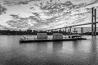 Savannah Giant April 2021