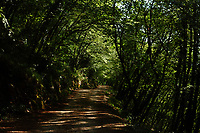 Here, a trail on the mountain slope, in the wood. This is a flat tract, agreeably shaded. The photo has been taken on the Monte Appiolo, in the Monti Aurunci Natural Park, near Lenola.