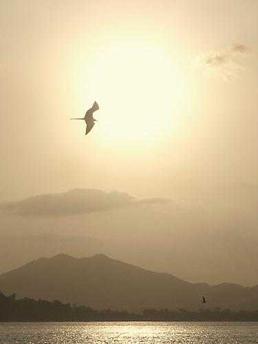 Atardecer y fregata volando en Ciudad de Panamá