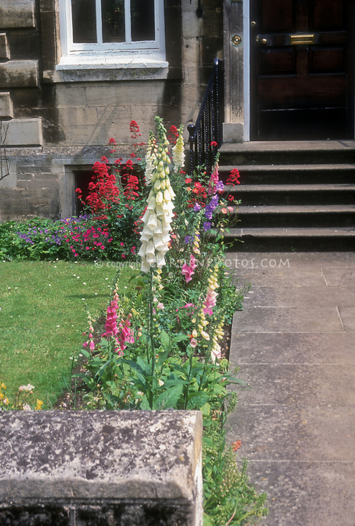 Digitalis foxglove lining entrance pathway to house front door, concrete pathway, centrathus, black door, stone house, wall, traditional entryway and steps stairs