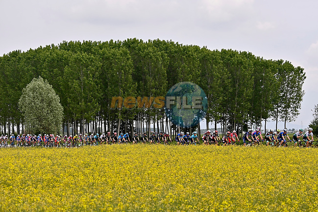 The peloton in action during Stage 2 of the 2021 Giro d'Italia, running 179km from Stupinigi (Nichelino) to Novara, Italy. 9th May 2021.  <br /> Picture: LaPresse/Fabio Ferrari   Cyclefile<br /> <br /> All photos usage must carry mandatory copyright credit (© Cyclefile   LaPresse/Fabio Ferrari)