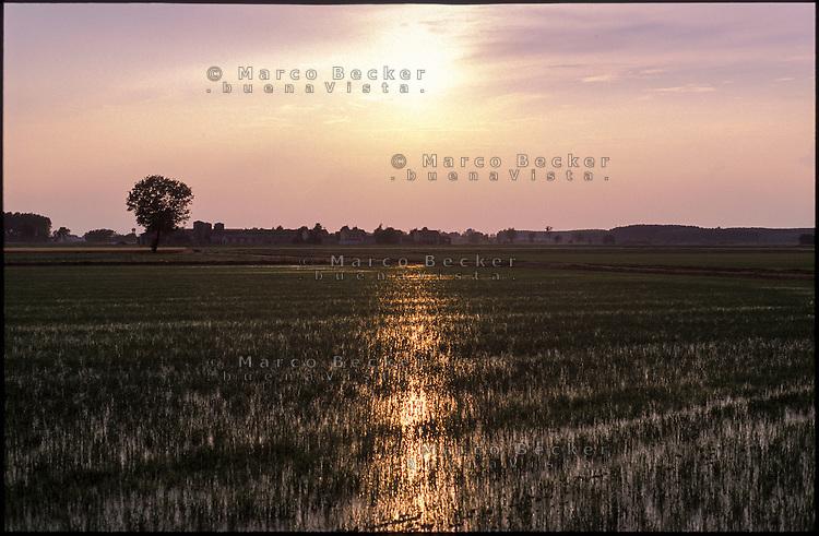 Besate (Milano). Risaia al tramonto --- Besate (Milan). Ricefield at sunset
