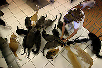 Cats gather around the food dish in the private Ocean Reef community on Key Largo, Florida, Three volunteers--including Susan Hershey, care for the area's feral cats, making sure the animals are spayed or neutered as well as fed. In ten years this program has cut the population from a high of some 2,000 cats down to about 500.When the decision is made to fight an invasive species, the methods can be ruthless: widespread slayings, mass poisonings, relentless uprootings. But the only thing these feral cats are in danger of is being killed by kindness.