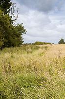 Field margins after harvest - Lincolnshire, September