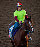 October 28, 2014:  Palace, trained by Linda Rice, exercises in preparation for the Breeders' Cup Xpressbet Sprint at Santa Anita Race Course in Arcadia, California on October 28, 2014. Scott Serio/ESW/CSM