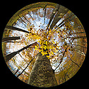 Looking up at the canopy of a Beech woodland {Fagus sylvatica} in autumn through a circular fisheye lens.  Plitvice Lakes National Park, Croatia. November.