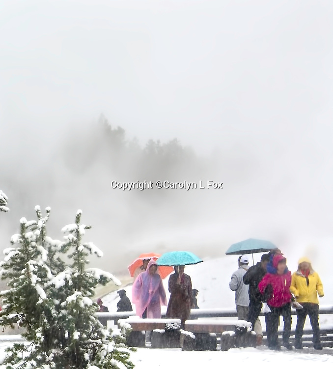 Tourists walk in the snow with umbrellas in Yellowstone.