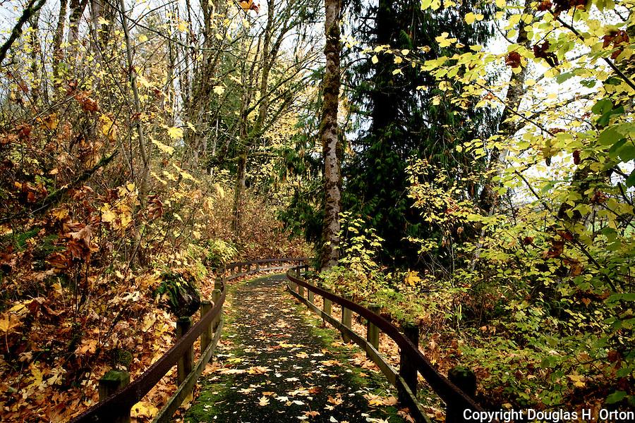 Fall carpet of Big Leaf Maple leafs covers hiking trail in Rasar State Prak near Mt. Baker, Washington.  Rasar State Park lies alonog the famous Skagit River.