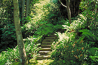 WOODEN STAIRS AND TALL FIR TREES IN RESIDENTIAL GARDEN, Path, stairway, forest, control, curve, steps, ferns. VANCOUVER BRITISH COLUMBIA CANADA.