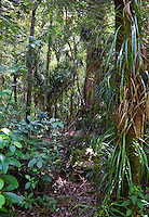 Waipoua Forest, near Tane Mahuta Tree.  North Island, New Zealand.