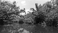 Estero River, Koreshan Unity Settlement, Estero, FL, Canon EOS 650, 35mm SLR film camera, August 2018.  (Photo by Brian Cleary/www.bcpix.com)