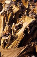 Europe/France/Auvergne/12/Aveyron/Villefranche-de-Rouergue: Stockfish sur le marché de la place Notre-Dame