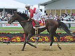 Orb (no. 1), ridden by Joel Rosario and trained by Claude McGaughey III, fails in his bid to win the 138th running of the grade 1 Preakness Stakes for three year olds on May 18, 2013 at Pimlico Race Course in Baltimore, Maryland  (Bob Mayberger/Eclipse Sportswire)