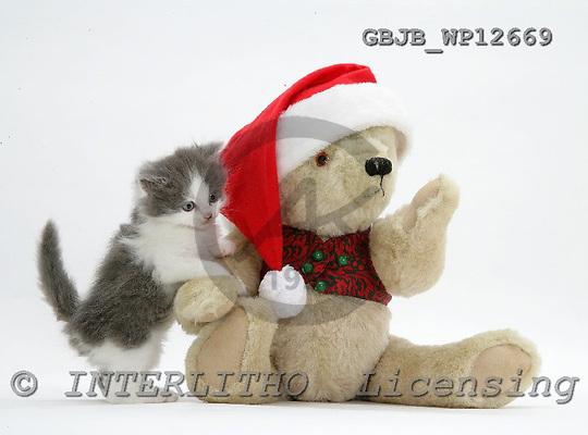 Kim, CHRISTMAS ANIMALS, photos, GBJBWP12669,#XA# stickers