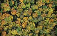 Deutschland, Wald, Laubwald, Herbstlaub