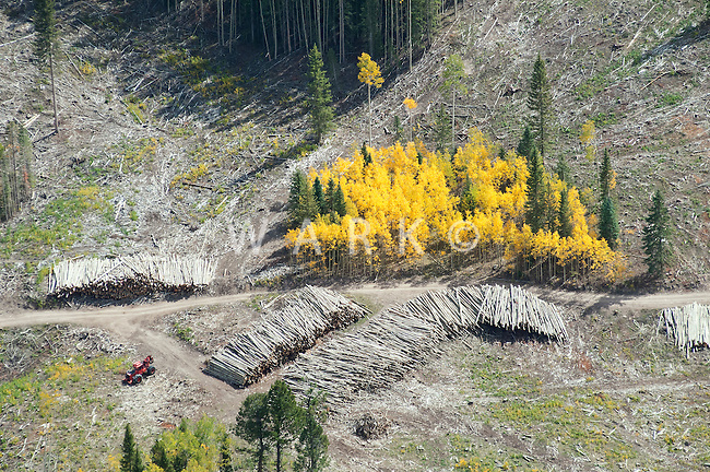 Logging in the fall, Colorado high country.