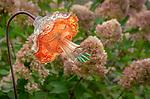 Vashon-Maury Island, WA: Vintage glass flower with hydrangea paniculata 'Limelight'